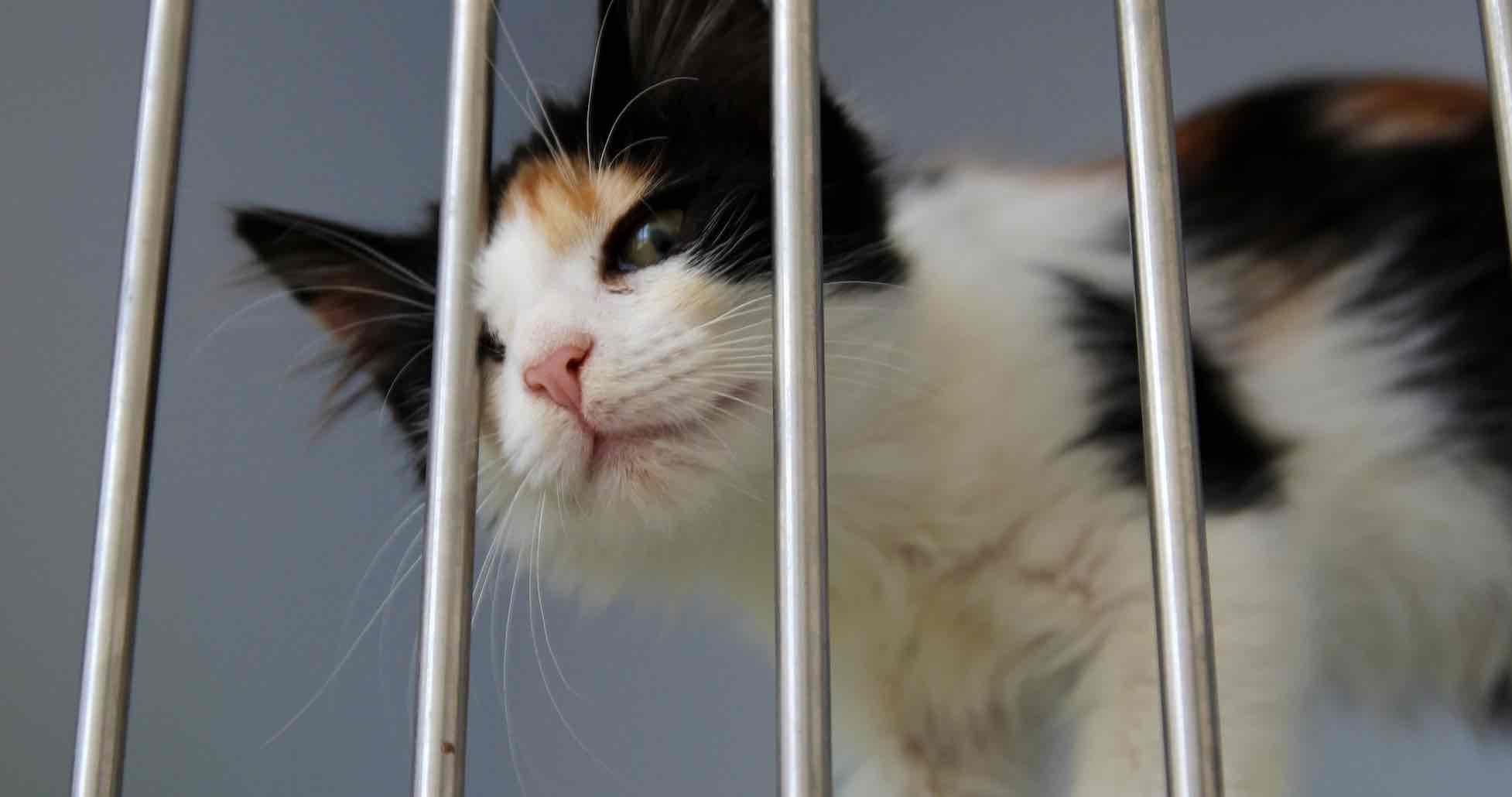 ouvrir un refuge pour animaux